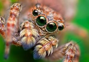 spider google googlebot