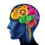 christian bock, article invité, solution stress, cerveau reptilien