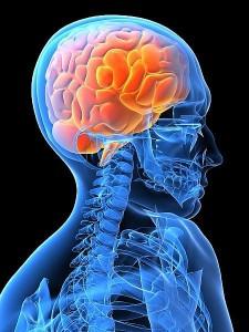 neuromarketing votre cerveau les intéresse, patrick renvoisé, cerveau reptilien, neuromarketing