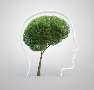 entretenir son cerveau, développer sa créativité, gagner en efficacité, développement personnel
